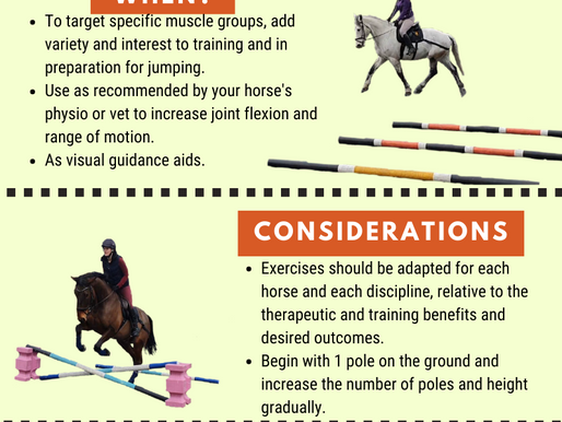 Pole work with equine balance bands