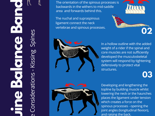 Exercise considerations - kissing spines