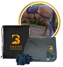 Equine Balance Bands, Equiband, Equine Bands, PVP Bungee Bands, Bum Building Bands, Bum Bands, Training bands for horses