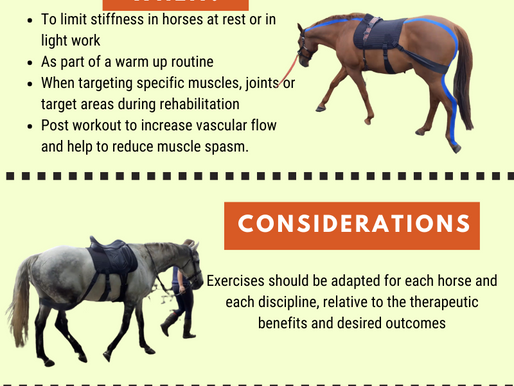 Sports and remedial massage therapist creates infographics about equine balance bands