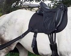 Dressage equine balance bands