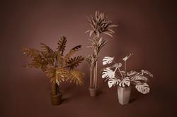 Plasma Vista - Plants - 1