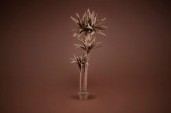 Plasma Vista - Plants - 2