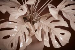 Plasma Vista - Plants - 9