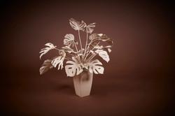 Plasma Vista - Plants - 7