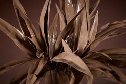 Plasma Vista - Plants - 3