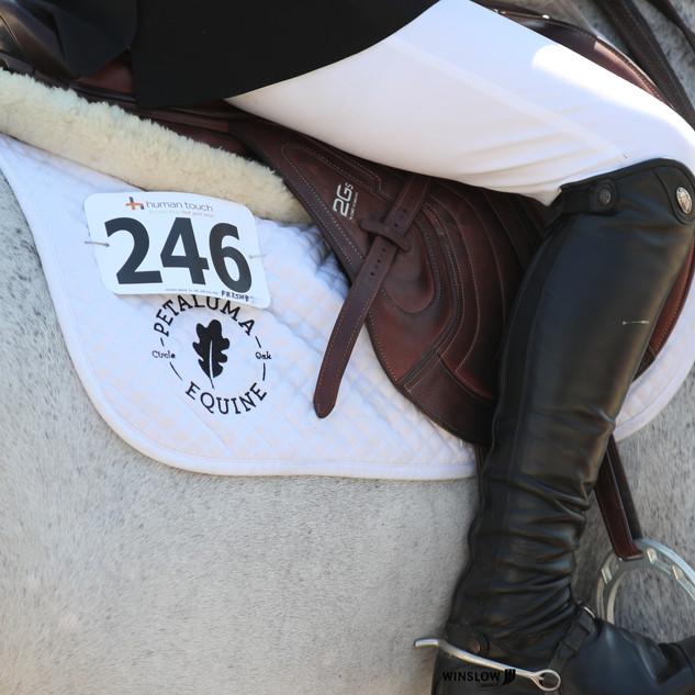 Petaluma Equine.jpg
