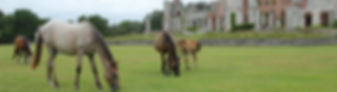Cumberland Island Horses and Ruin
