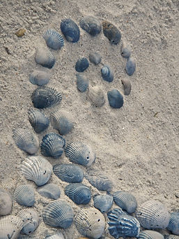 shellswirl3.jpg