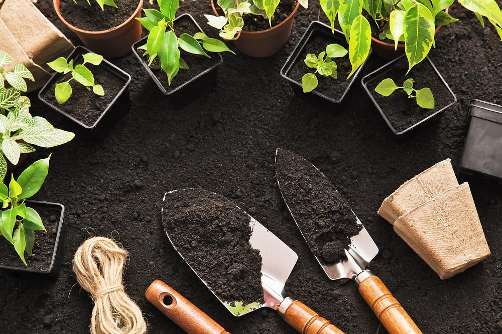 first garden tips