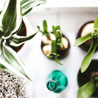Breathe easy_ Indoor plants can rid the