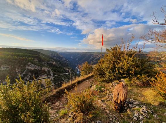 Vautour en pause au Roc des Hourtous-vautour-fa