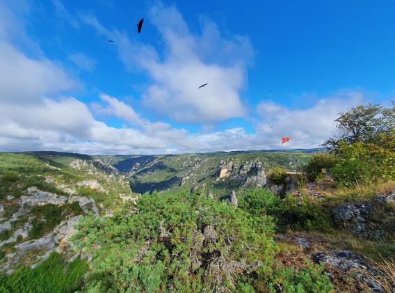 Vol de vautours Fauves au Roc des Hourtous.