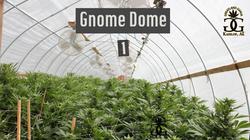 Gnome Dome1