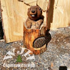Beaver in a Stump