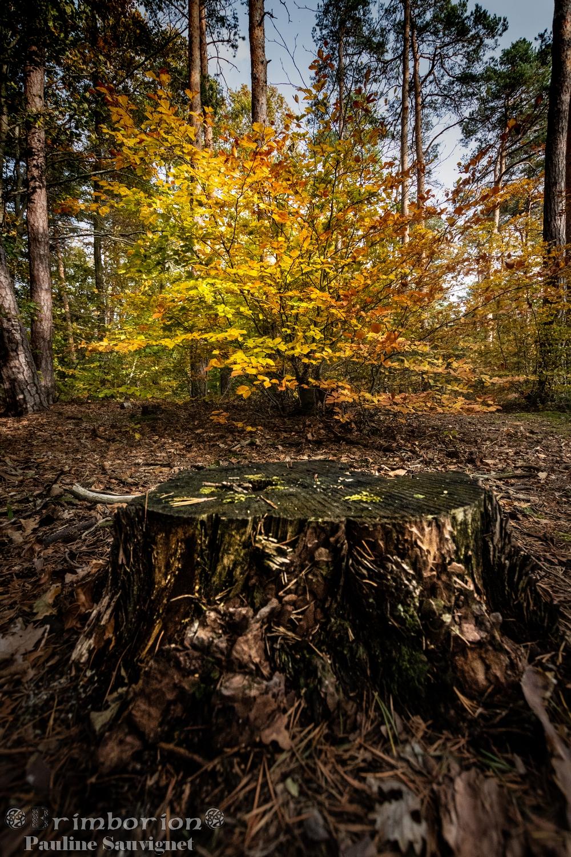 Légende dans la forêt d'automne est connu seulement du petit peuple