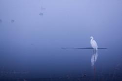 Brume matinal hivernal