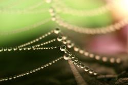 Les colliers de la nature