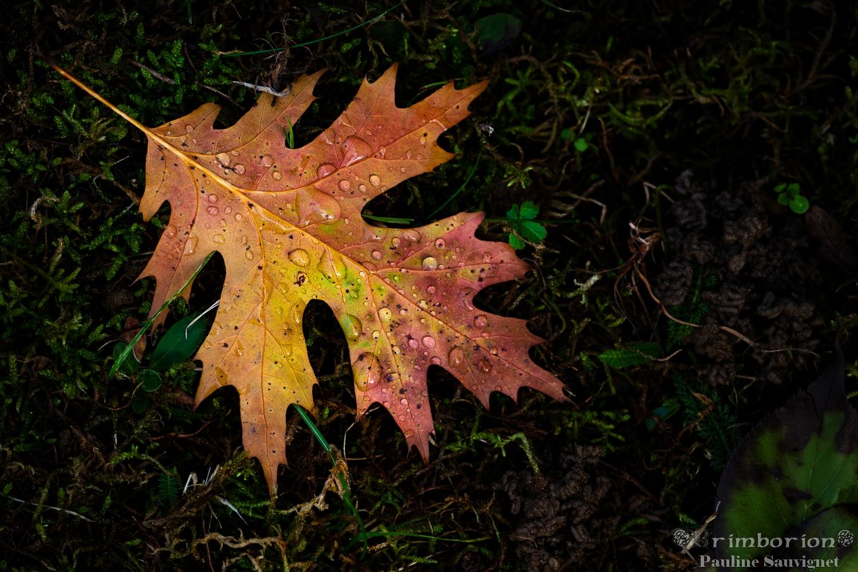 L'automne aux miles gouttes