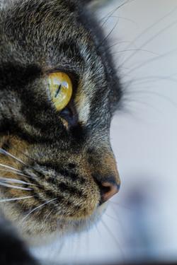 Les yeux de mon chat