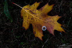 L'automne aux miles couleurs