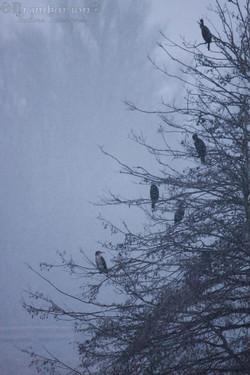 froid neige et cormoran