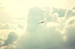 A hauteur des cieux