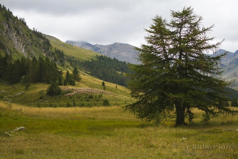 Vallée de Lauzanier
