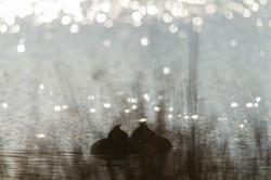Le printemps des couples