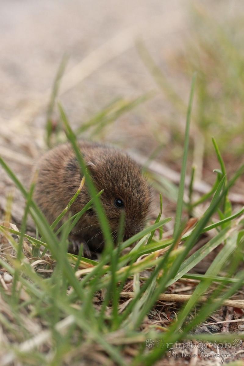 des petits habitants des herbes