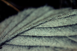 La dureté de l'hiver