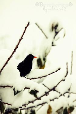 Dureté de l'hiver