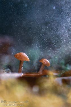 Sous la pluie ou le soleil,