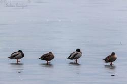 Dans le froid de l'étang