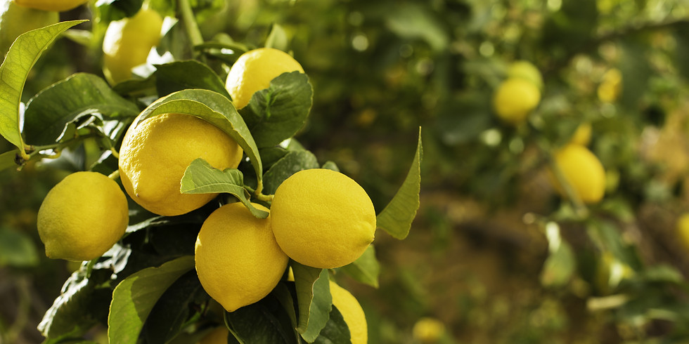 Book Discussion - The Lemon Tree