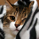 featured-Ethylene-Glycol-Poisoning-cats_