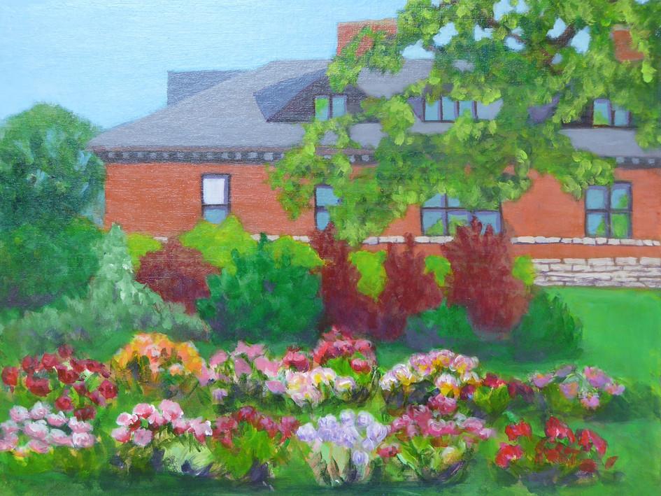 Ornamental Garden Peonies