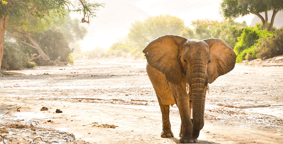 Elephant in Riverbed