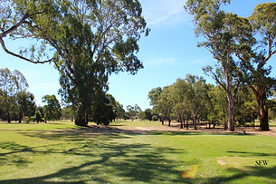 the 12th green surrounded by trees