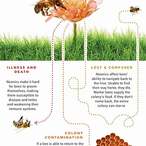 neonics in insecticides