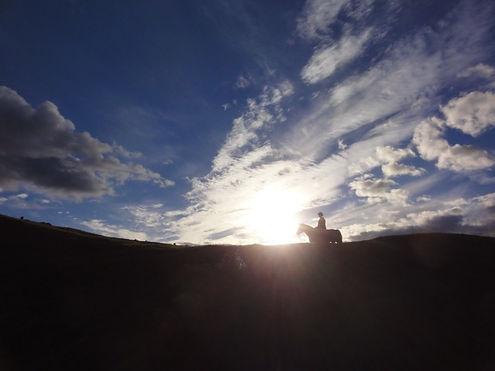 taranaki horse riding