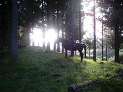 Horse Riding in Taranaki