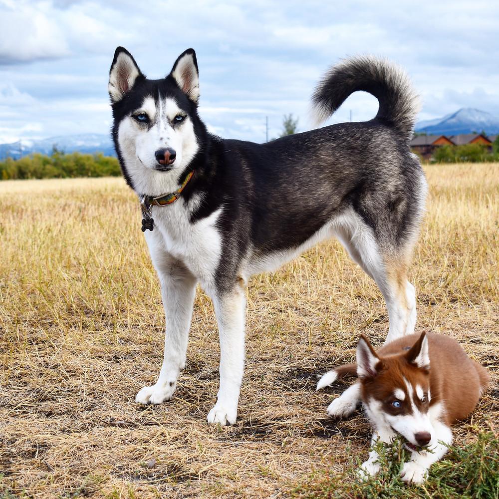 Dogs at Gallatin Valley Regional Park Bozeman Montana