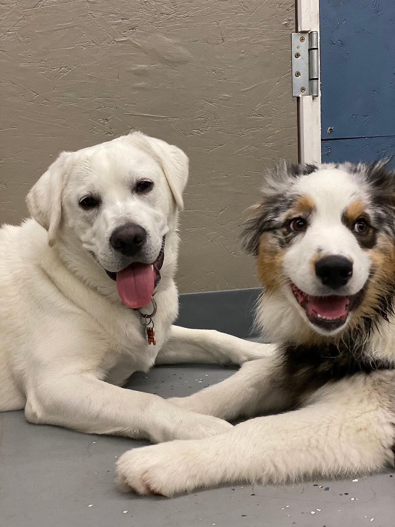 Summit Puppies