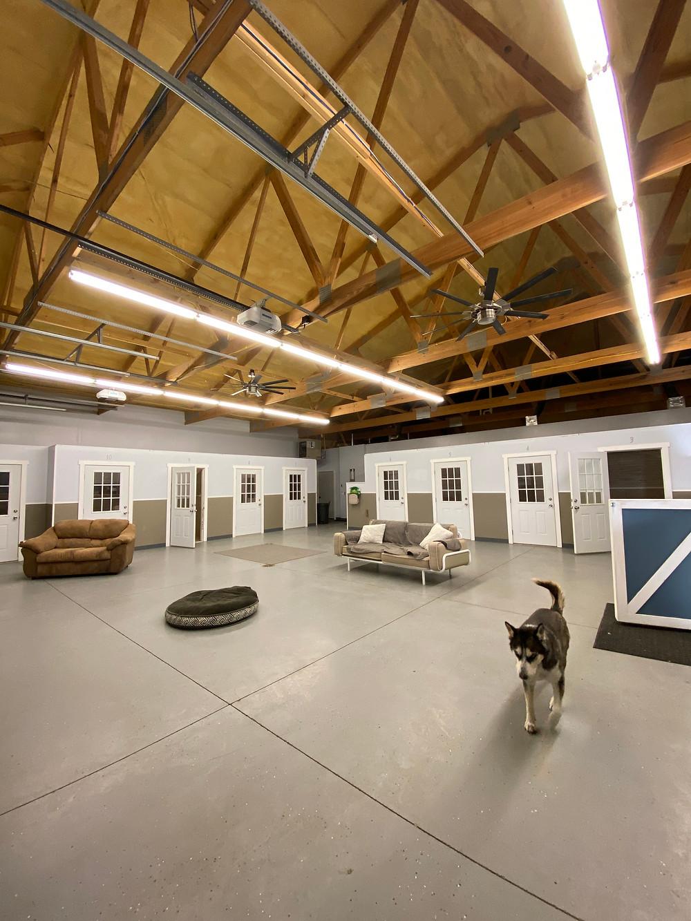 Summit Pet Resort Dog Boarding Daycare Training