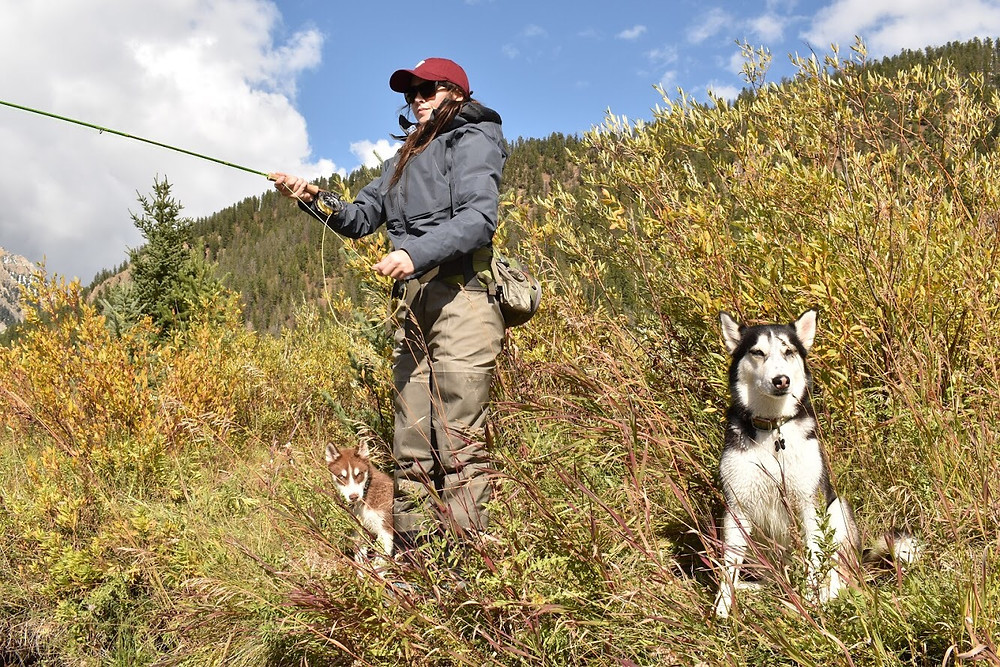 Dog Training Bozeman Montana Puppy Class