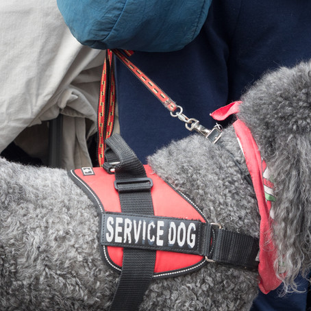 A Basic Explanation Of Service & Emotional Support Dogs (and the difference between the two)