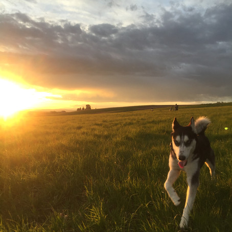 The Top 5 Dog-Friendly Bozeman Trails & Parks You Can Do In Under An Hour