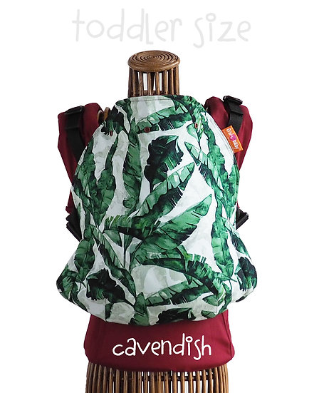 Toddler : Cavendish
