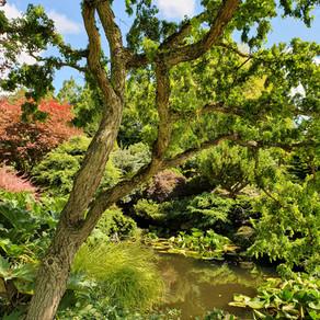 John's Garden at Ashwood Nurseries.